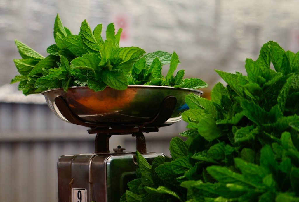 weighing fresh mint