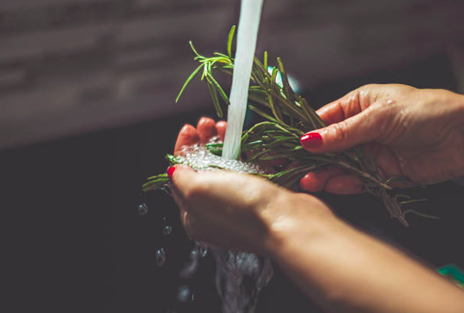 woman washing rosemary