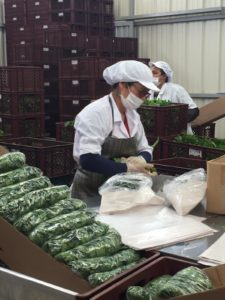 women working with fresh herbs